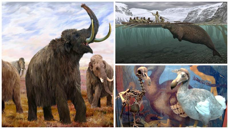 Животные, которых больше не существует по вине человека