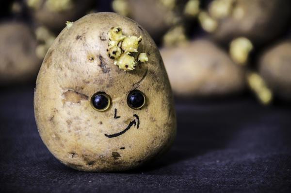 Важные вопросы о фитофторозе картофеля