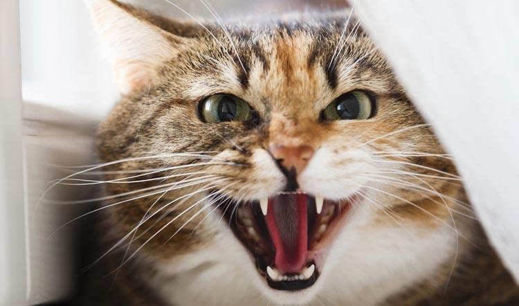 Неадекватное поведение кота.…
