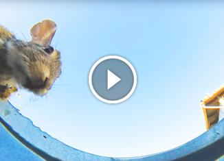 Парень положил камеру в ведро с водой чтоб увидеть какие животные будут пить