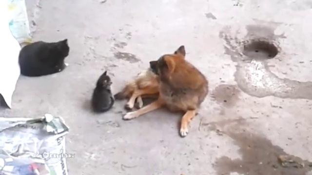 Кошка привела котят к своему другу