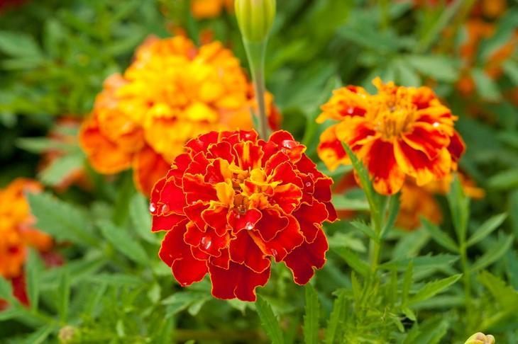10 декоративных растений, которые зацветают в год посева