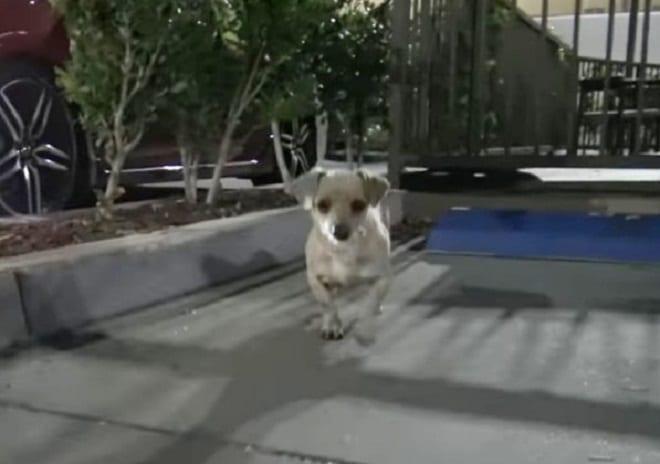 Голодный пес просил еду на парковке Starbucks, а его грустные глазки ждали помощи