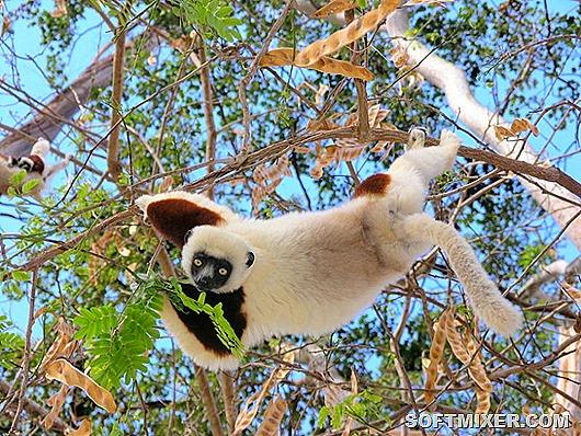 Карликовый материк – Мадагаскар