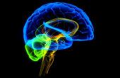 Японские ученые обнаружили в мозге