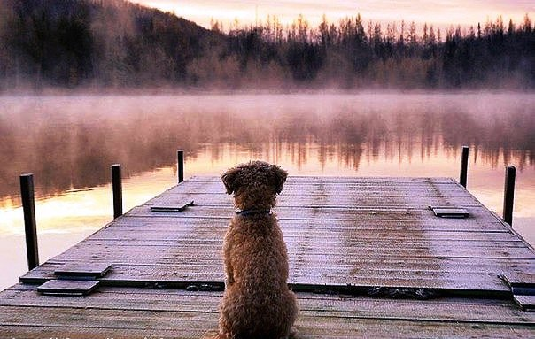 Собака - образец для подражания. Образец честности, преданности и веры.