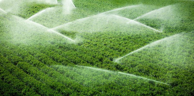 Напечатанные на листьях сенсоры подскажут фермерам, когда пора поливать