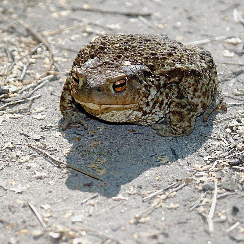 Баба-жаба (+21)