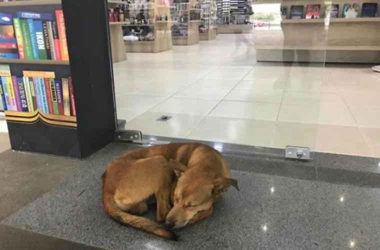 Собака украла из магазина книгу, название которой всех растрогало