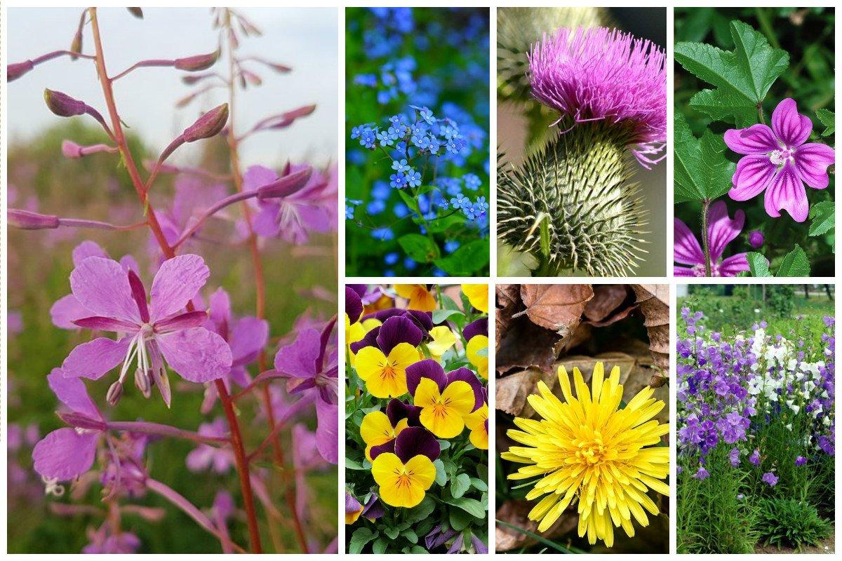 Съедобные сорняки - чем можно подкрепиться, когда потерялся или совсем нет денег выживание, интересное, растения, съедобные