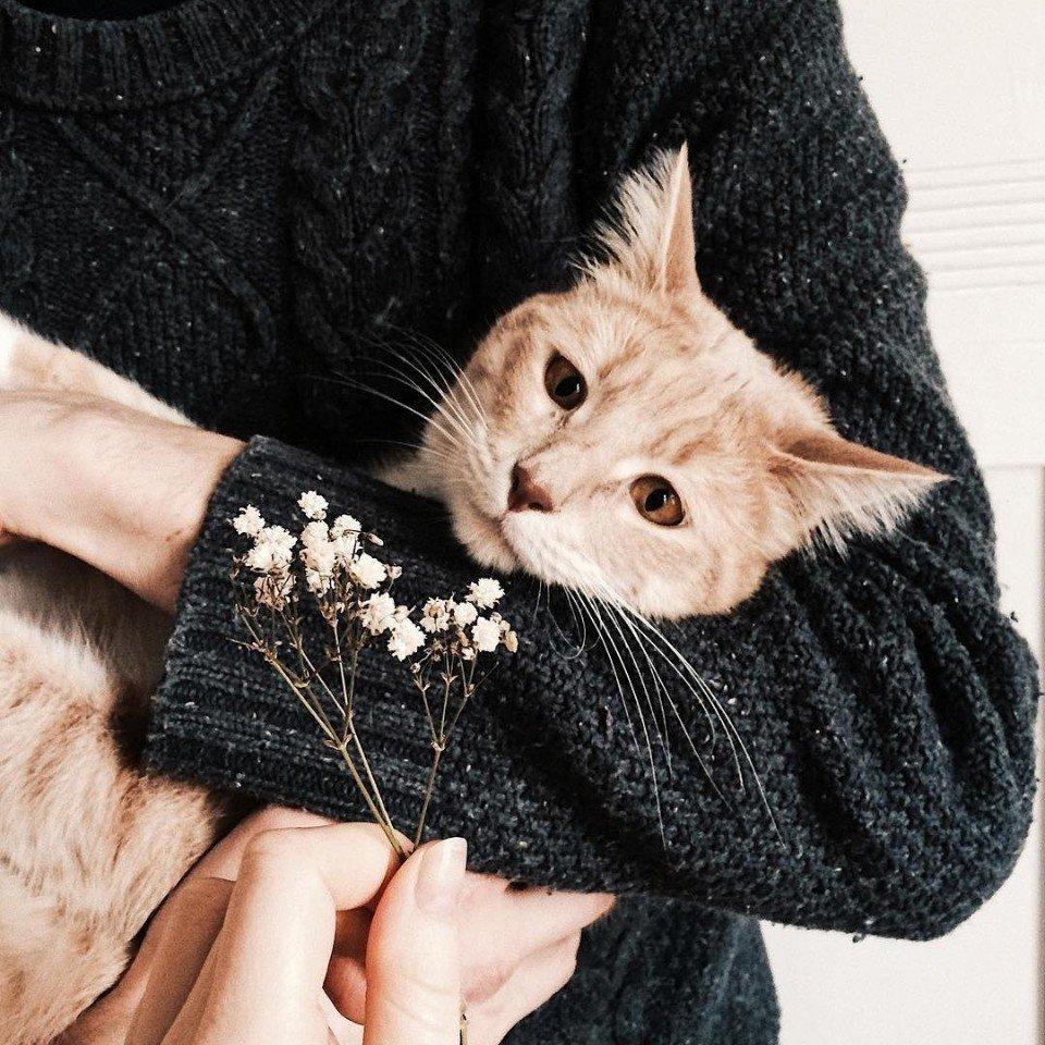 В следующей жизни хочу быть толстым ленивым котиком