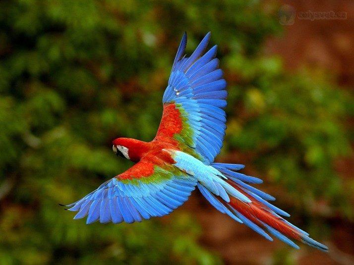 Птицы красивые по определению (во всяком случае, большая их часть)