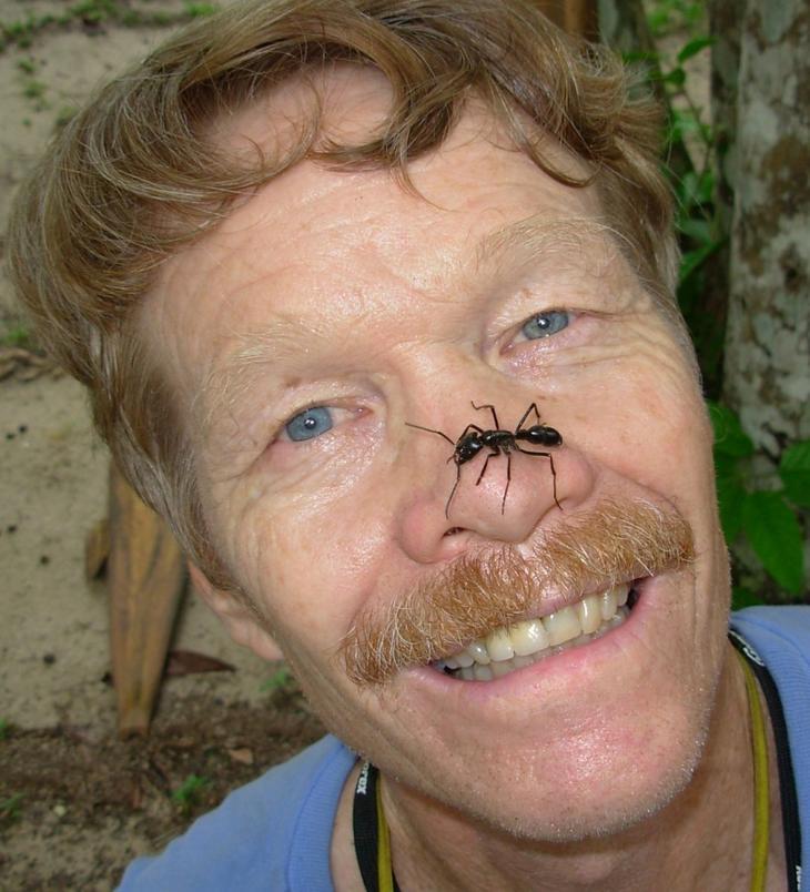 Самые жуткие укусы насекомых по версии человека, испытавшего их на себе
