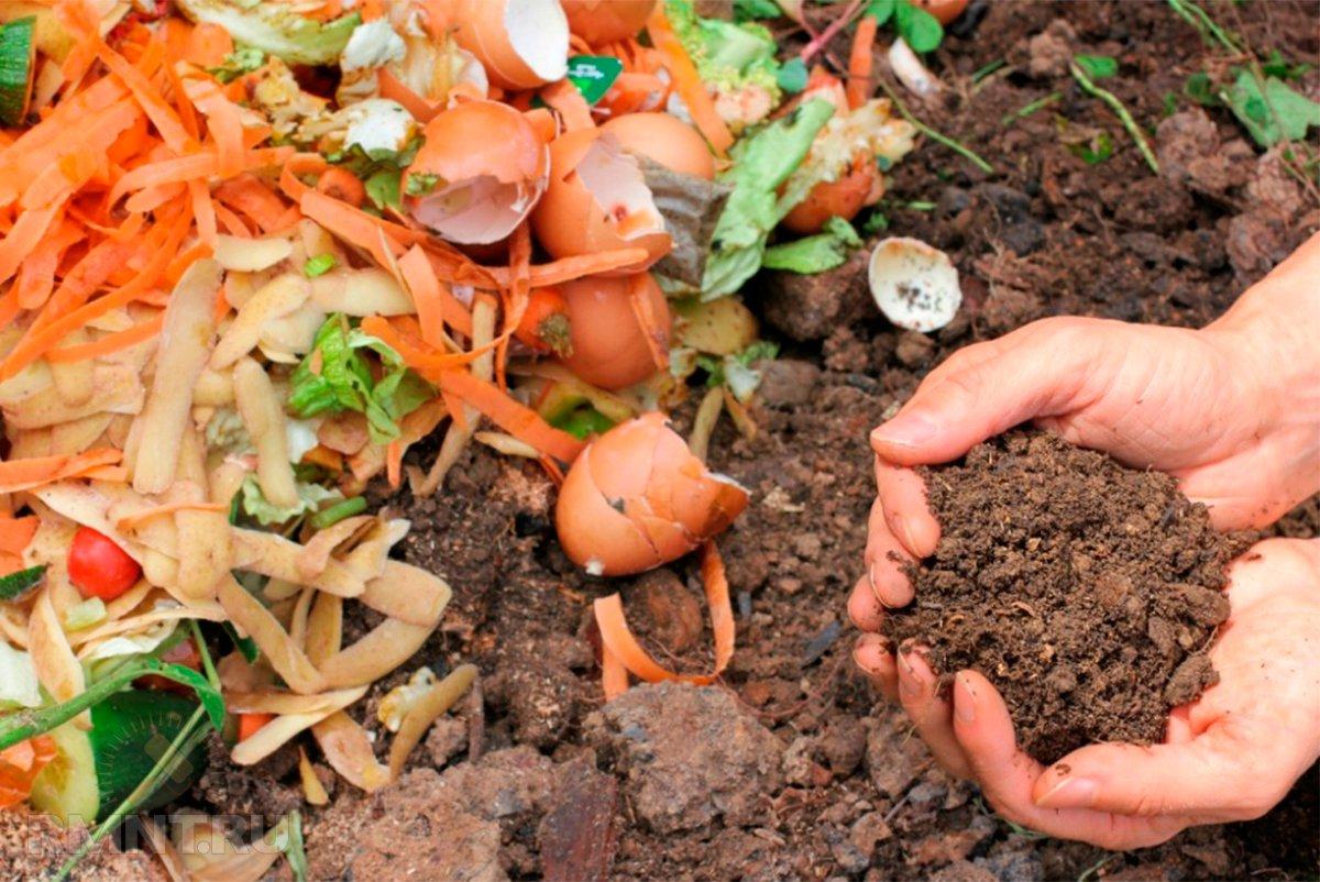 Приготовить удобрение в домашних условиях