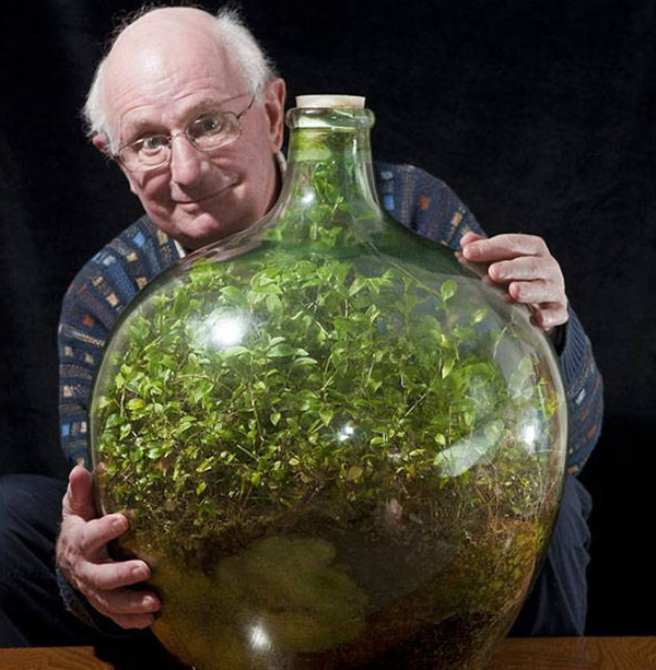 Растение в бутылке