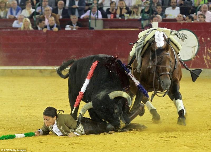 Женщина-матадор, которая любит убивать быков и отрезать им уши, поплатилась сегодня
