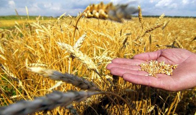 Итоги уборочной кампании-2017 в России: не будет ли цена рекорда слишком большой для агрария?