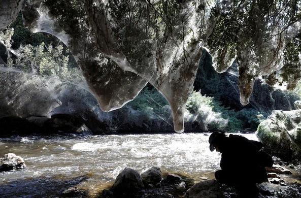 В Иерусалиме образовался «заколдованный лес»