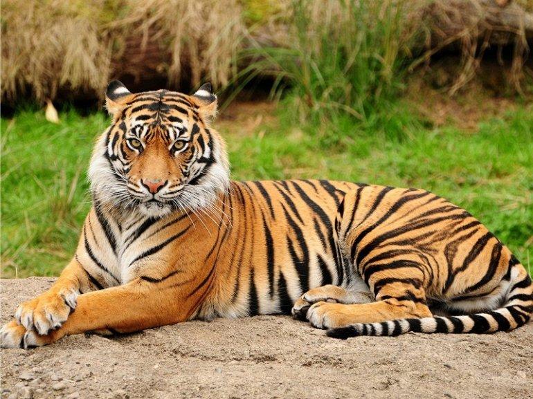 Самые сильные животные мира
