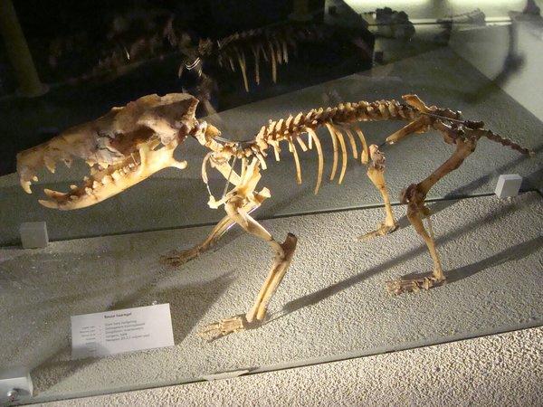 Ископаемые гимнуры были в разы больше современных, некоторые весили до 10 кг.
