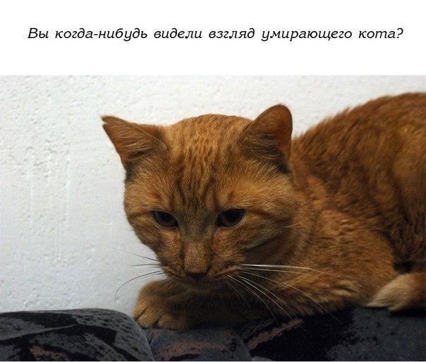История одного доброго кота.…