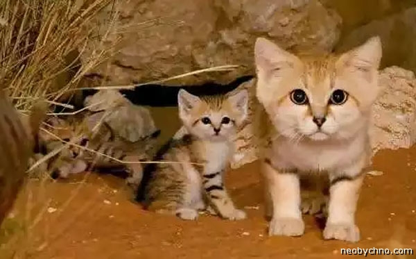 Животные пустыни или Жажда жизни, как она есть