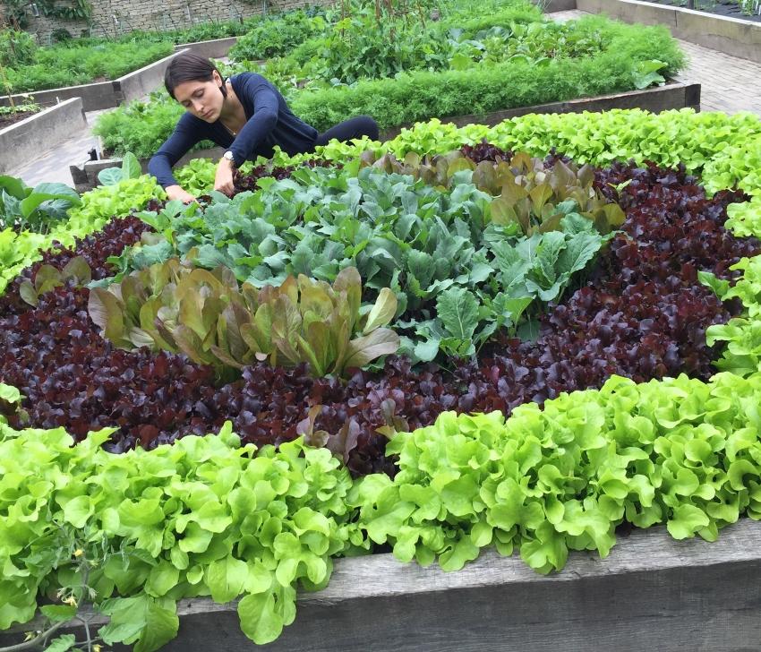 Советы - сайт для садоводов 28