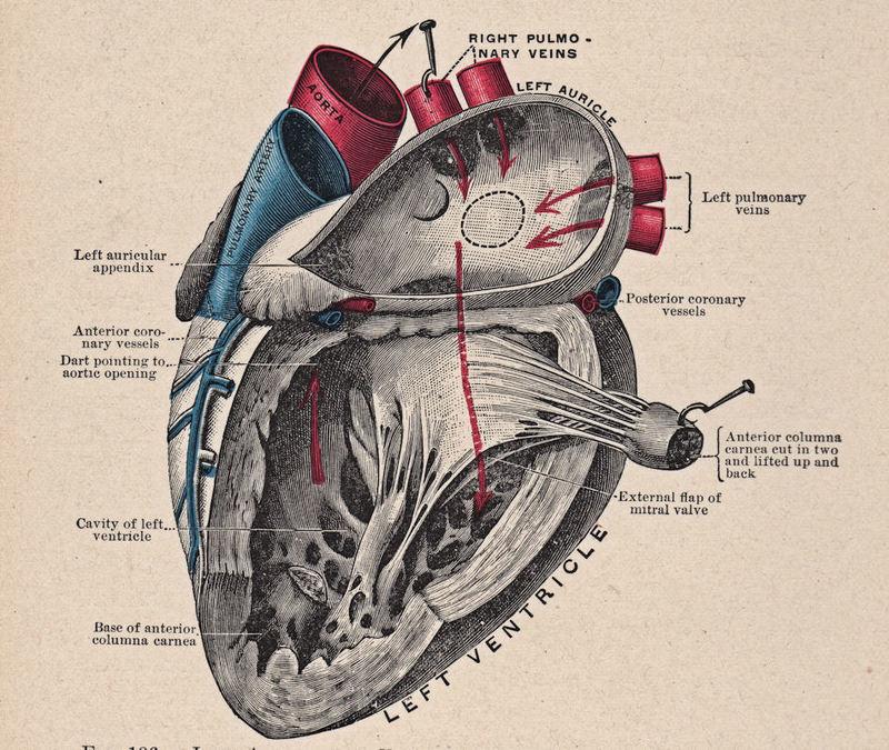 Быстрое сердце: Сердечные аритмии — ЧТО делать