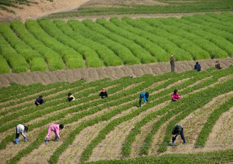 13 интересных снимков из Северной Кореи