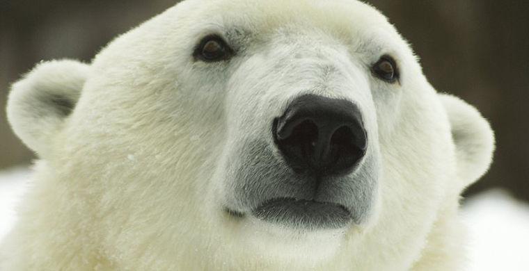 Самую старую медведицу в США поздравили с днем рождения