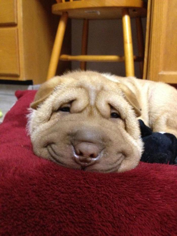 Минутка позитива - собаки-улыбаки, которые вас покорят!