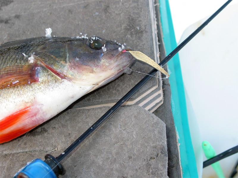 рыбалка на озере вейно