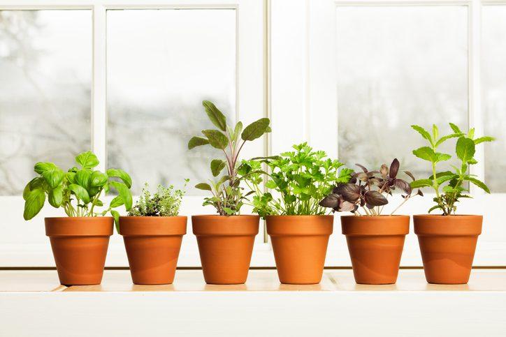 5 супер - идей выращивания рассады на подоконнике