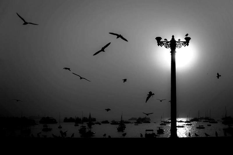 Птицы и лодки - гавань Мумбаи, Индия индия, красота, талант, творчество, фото, фотограф, фотография, художник
