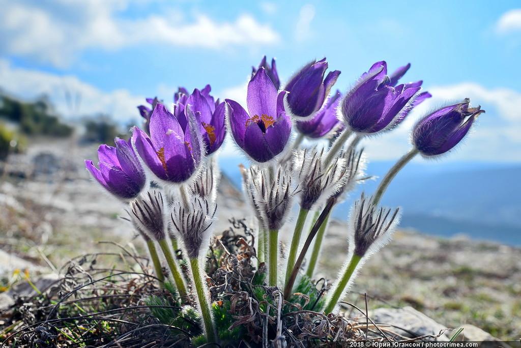 Цветы пещерных монастырей Крыма. Челтер-Мармара