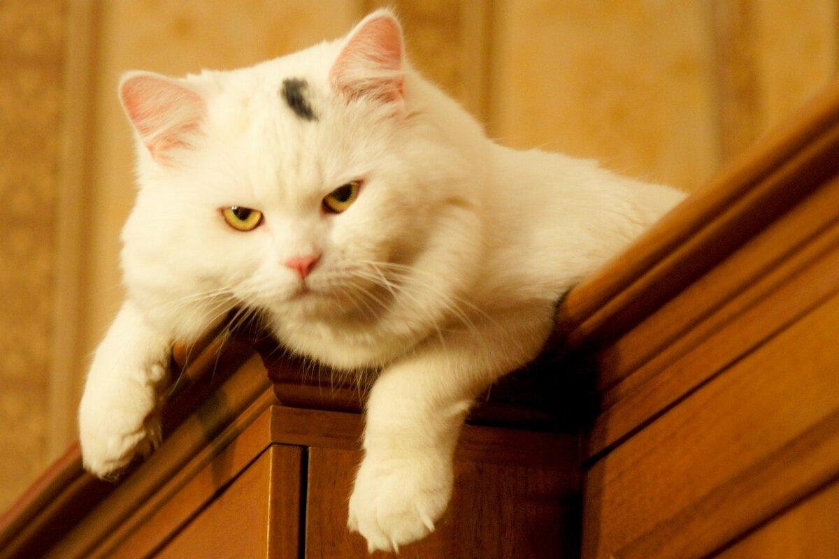 Котик Ñмотрит Ñо шкафа