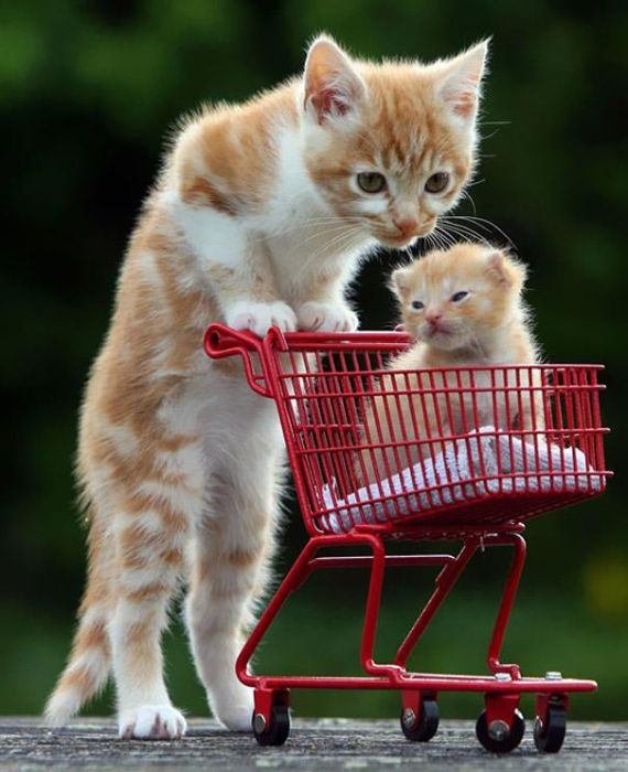 Животные и их маленькие копии - трогательные фото