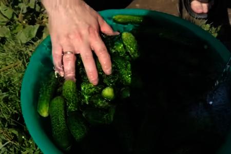 Быстрый способ засолки огурцов на зиму / огурцы в бутылке: фото шаг 1