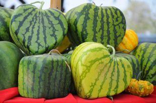 Безопасны ли необычно выращенные овощи и фрукты?