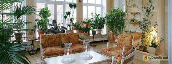 Зеленый сад на балконе круглый год