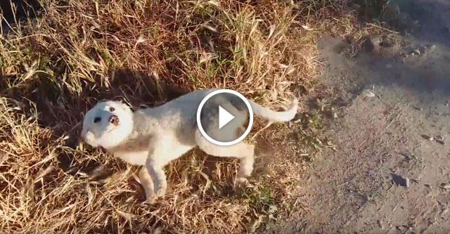Увидев своего спасителя, щенок был на седьмом небе от счастья