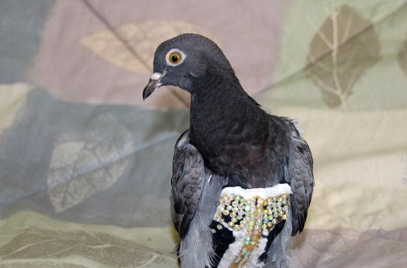 В Аризоне нашли птицу в платье стразами