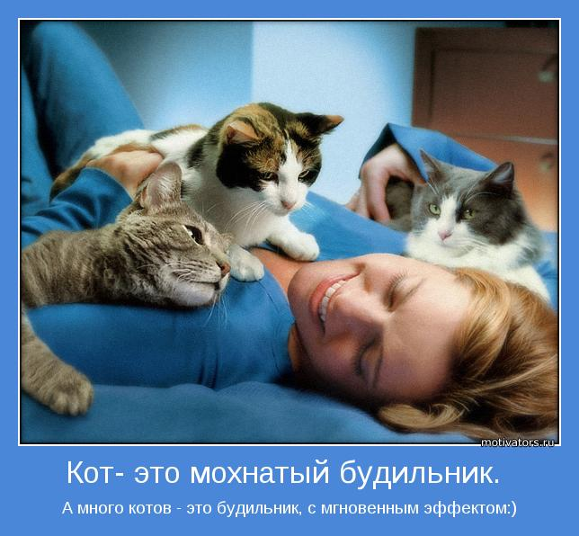 """""""КОТЫ-БУДИЛЬНИКИ"""".Забавное видео+картинки"""