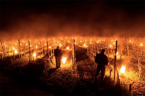 Худший год в истории виноделия