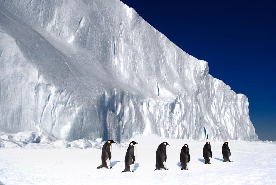 Заповедник в Антарктиде