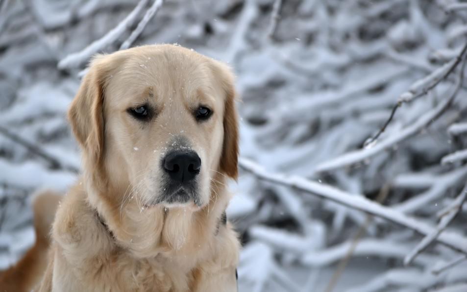 На Алтае собака спасла брошенного матерью на морозе ребенка