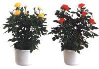 Язык растений