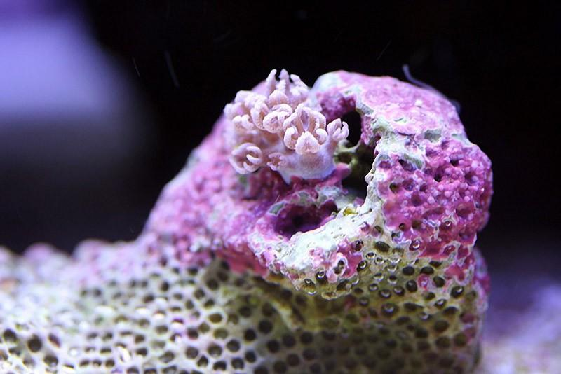 Макросъемка кораллов: буйство красок и форм