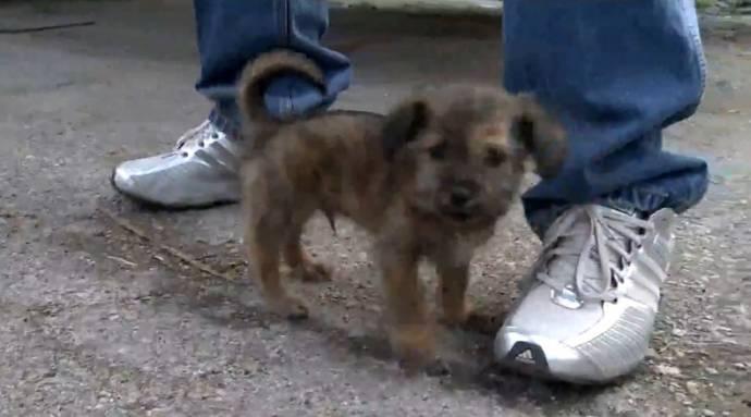 Мусорщик из Индианы спас выброшенного в бак щенка