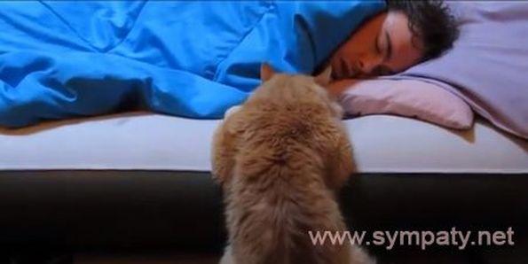 Как сделать чтобы кошка с тобой спать